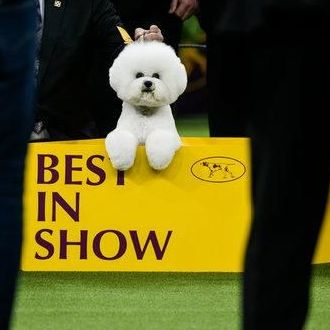 TV$%https://livefootballcbstv.de/westminsterdogshow